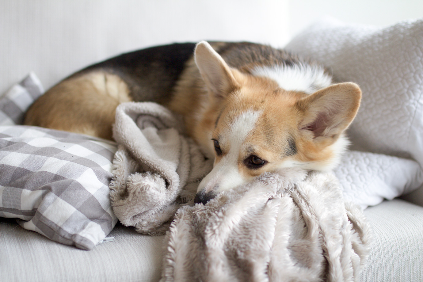 10 Things You Need To Get For Your Corgi Puppy Ana Douglas